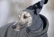 Rupert clothing options