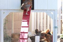 Chickens! / by Karen Hunt