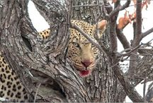 My Wildlife / Fotos taken in Kruger National Park