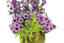 Květinové truhlíky