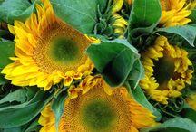 Celebrate Yellow / Flowers