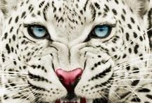 animal preferat