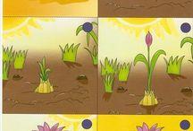 Tavasz - Hajtatás, vetés