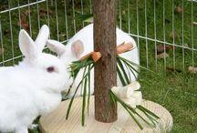 konijnen speelgoed
