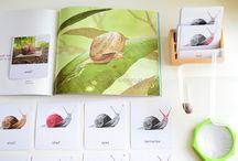 Snail Unit Activities