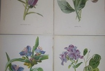 Seed Packets - Examples / by Floret Flower Farm