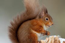 Red Squirrels / My absolute favourites