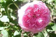 I min trädgård
