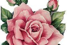 Цветы, природа