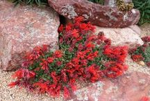 .Perennials We Love.