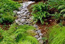 Creek gardening NEW HOME 2018