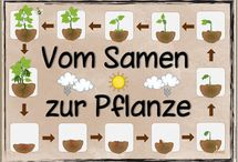 Frühling, Pflanzen