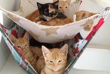 juguetes e ideas para gatos