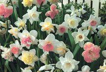 flowers flowers everywhere! / by Dawn Clark