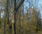Our woods
