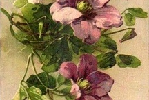 květy / obrázky,