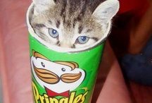 Favorite Hiding Places / Oh the places you may find a kitty :)