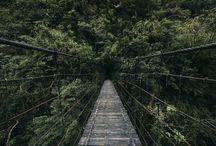 Canon | I cesta je cíl | Bridges