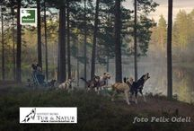 Hundspann på Småländska / Unikt o underbart sätt att uppleva småländsk natur med hundspann - Året om!