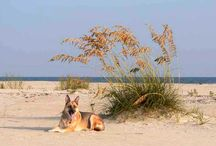 VOTE FOR PORT ST. JOE,FL. AS BEST PET FRIENDLY CITY IN U.S. / PORT ST. IS BEST PET FRIENDLY CITY IN U.S.