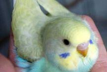 Birds!!! / Beautiful birds
