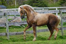 Najpiękniejsze konie
