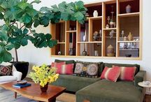 fiddle leaf fig / Loving the look of the Fiddle Leaf Fig or Ficus Lyrata. Hence a dedicated board :) Note: Fiddle-leaf Fig (Ficus lyrata) Fiddle-leaf Figs are hardy, tropical looking plants with long stems and large glossy leaves.