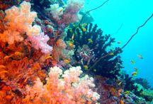 ~ Under the Sea ~