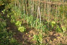 Nuestra huerta ecológica / Esta es nuestra huerta donde cultivamos alubias ecológica y otros productos de la huerta (tomates, lechugas, pepinos...) con los que luego elaboramos nuestras fabadas y otros platos