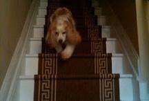Dog / by Kelly Prizel