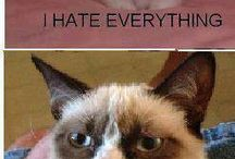 Grumpy cat / If you hate anger or cats this board is not for you