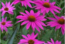 Flower Patch Gardens / Blog posts of my gardens, growing tips and trick as well as other gardens I have visited.