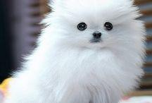 Too cute! / by UVU School of Arts