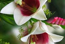 Floral ideas / by Ginny Spencer