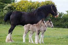 Horses. / by Ragna Ýr Sigurvinsdóttir