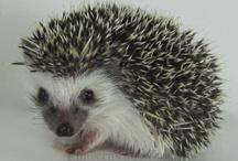 Hedgehog! / by Laura Elizabeth