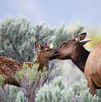 Montana flora & fauna