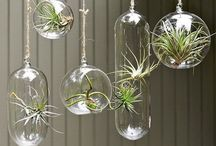 air plants & succulents