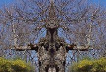 Az élet fái