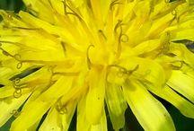 Bahar#Çiçek# Manzara / Güzel çiçekler ve manzaralar