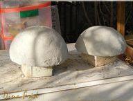 joaninha de cimento