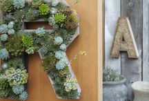 Vertical Gardens / by Alaina Connor