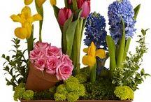 spring bulbs / by Bloem.Flowers.Chocolate.Paperie