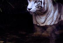 Animalia / by Kate {Beatriz Aluares}