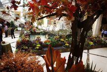 Fall Arrives in Las Vegas