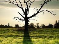 Trees / by Jenny Bartoy