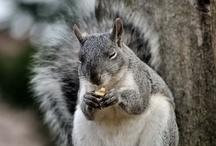 squirrels / by Leah Nixon