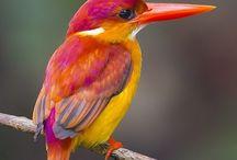 Beautiful bird's