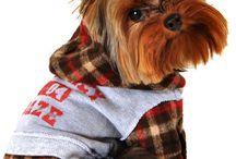 Future Pupchild wardrobe / by Dorothy-Anne Murphy