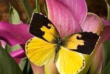 Butterfly and Moth / by Cora Van de Vlekkert